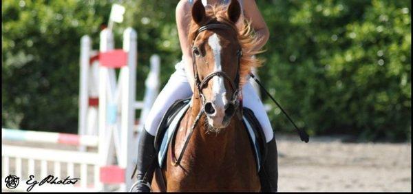 En concours le poney.