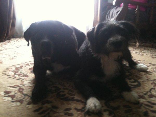 narko ( gauche ) à (droite) nina