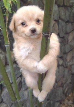 chien mignon