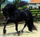 Photo de horse-s-solers