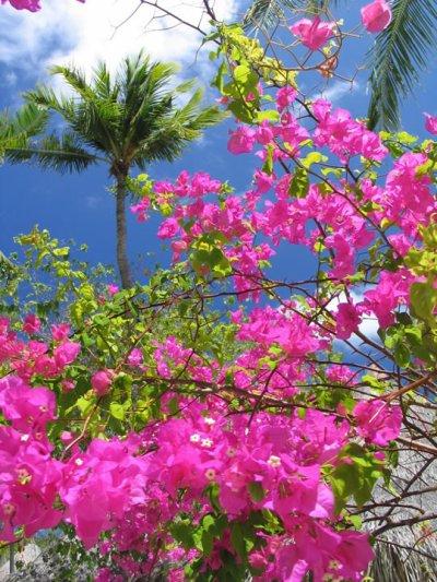 La femme endormie dans le jardin des fleurs vari es des for Le jardin des fleurs