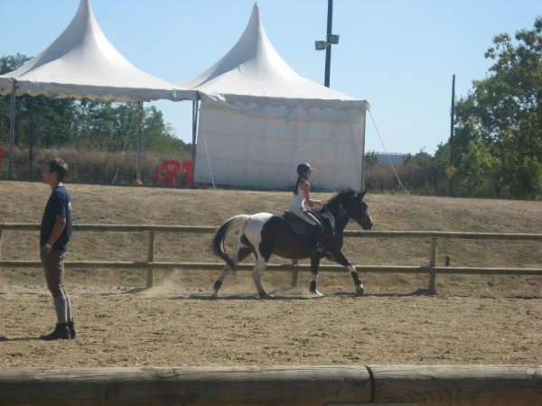 Cours cheval ♥