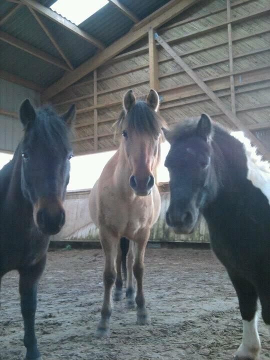 Justin , Isard , Hector