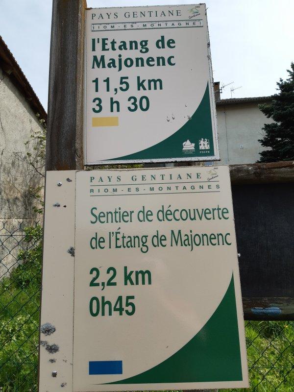 Majonenc (09.05.21)