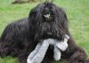 Lutz mon ours noir