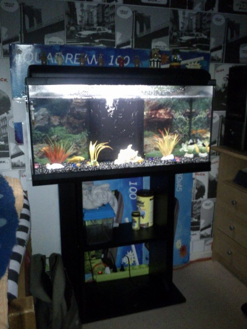 voila mon aquarium de 80 litre bienvenue sur mon blog. Black Bedroom Furniture Sets. Home Design Ideas