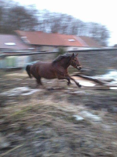 L'équitation est un sport qui se pratique à deux et pour tant c'est un sport individuel ... C'est normal, c'est parce qu'on ne fait qu'un avec notre monture ♥