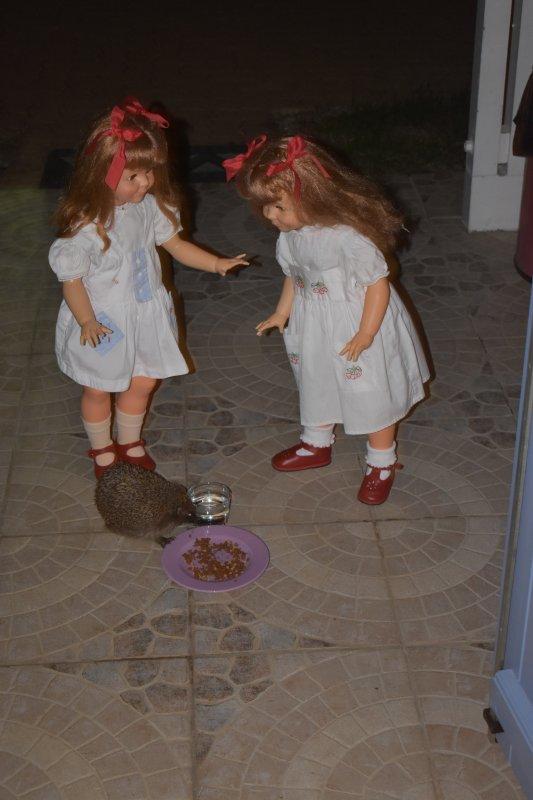 Hier soir.....les jumelles voulaient voir le hérisson....