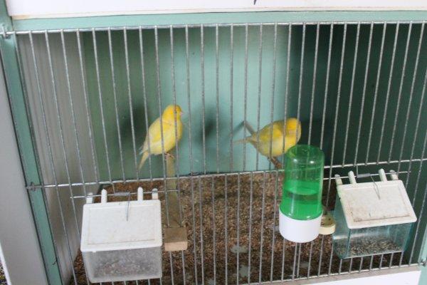 quelques jeunes mis en cage par deux ce Dimanche