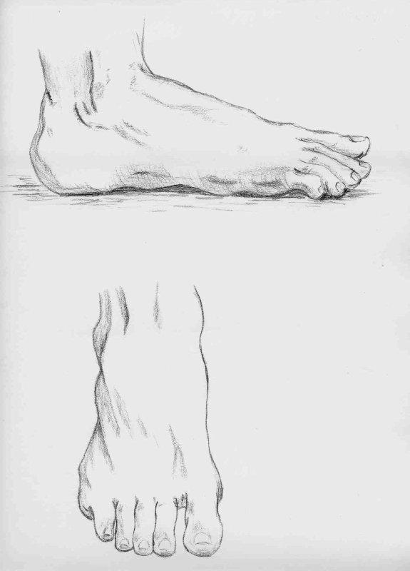 Dessin De Pied Humain quelques photocopies de dessins d'étude - comtesse d'artois