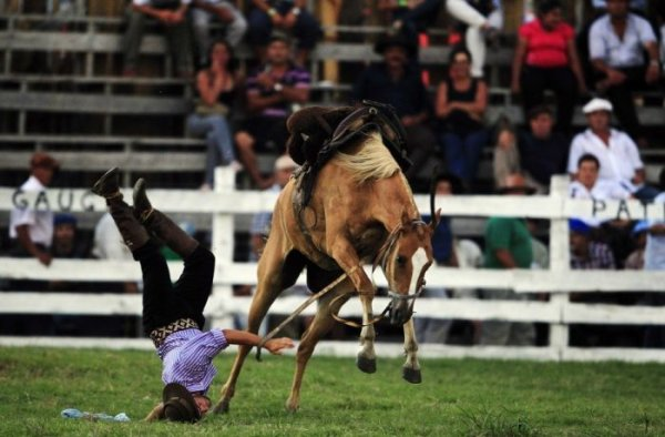 Fall from Notorious Horse 1
