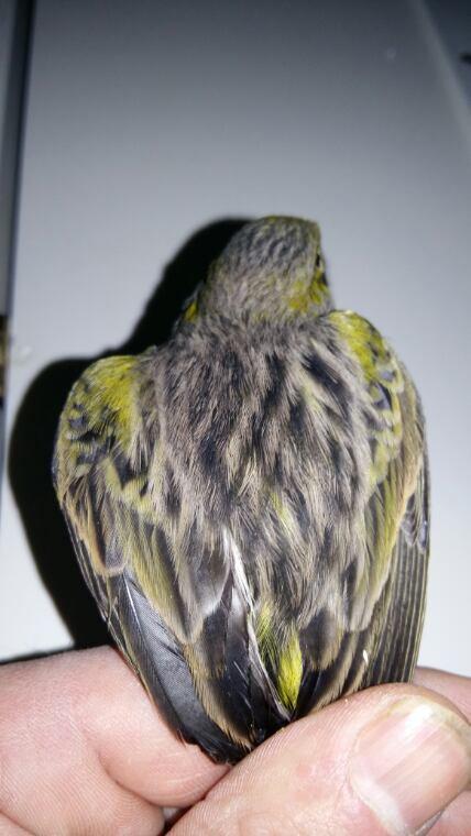Noir jaune mosaïque suite