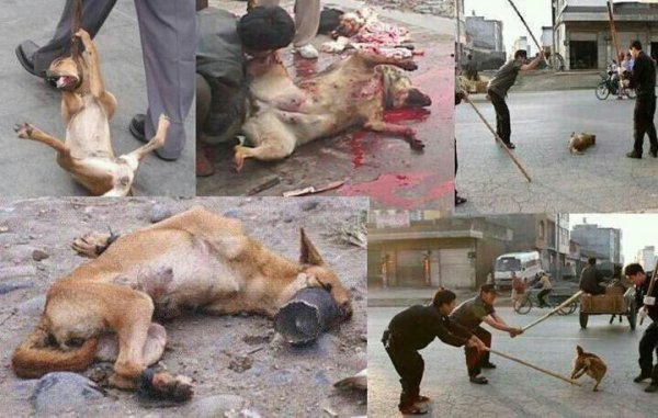 vraiment horrible!!!!!!!