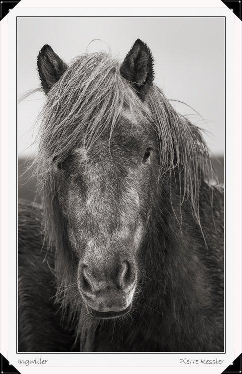Très loin, au plus profond du secret de notre âme, un cheval caracole...