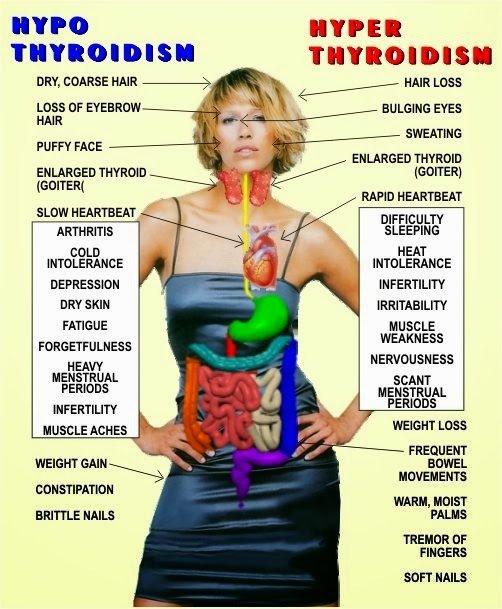l'hyperthyroïdie versus l'hypothyroïdie