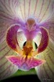 Photo de marie---orchidee