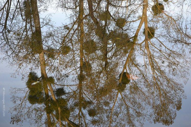 Jolis reflets d'automne