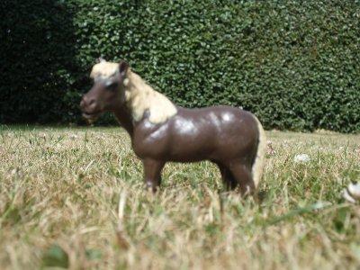 La présentation des poneys !