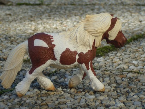 Les chevaux, les cavaliers et le personelle =)