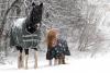 Les chevaux en hiver.