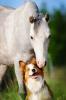 L'amour d'un chien et d'un cheval.