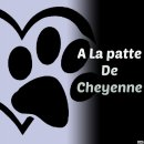 Photo de A-la-patte-de-Cheyenne