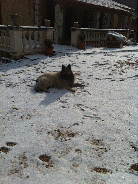 mon petit cœur dans la neige