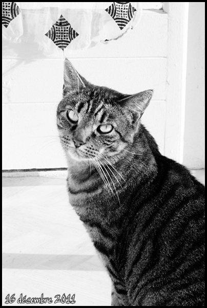 """""""L'idéal du calme est dans un chat assis""""Jules Renard"""