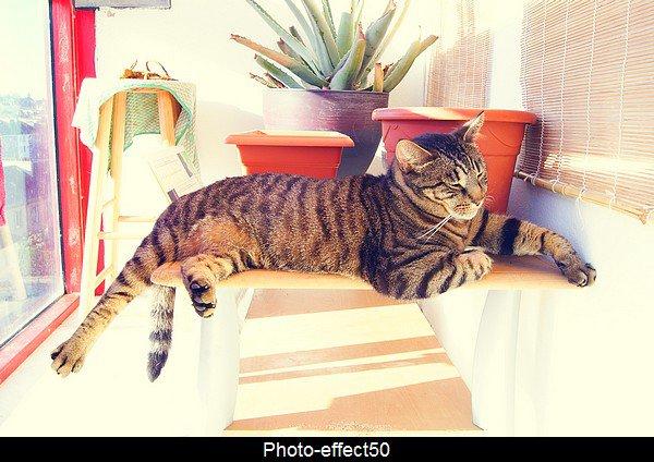 """""""Le ronronnement est le sourire du chat""""                       Hector biancotti"""