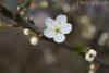Spring is back :D