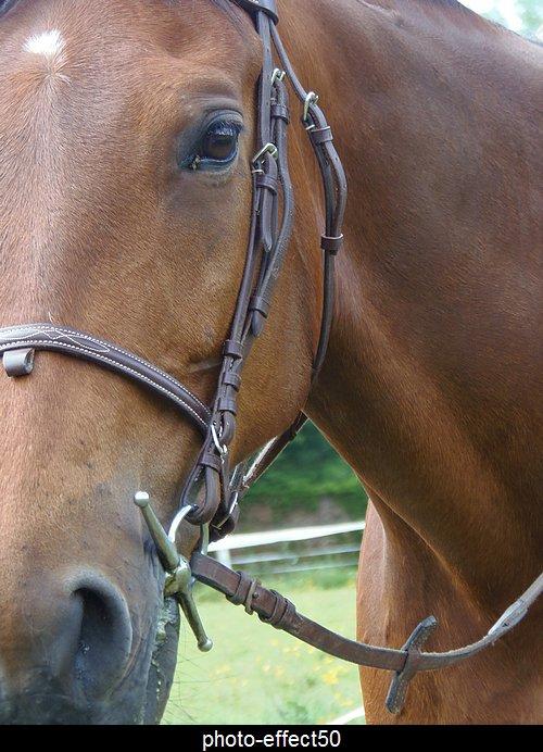 """""""Le respect du cheval,c'est la fondation de la liberté.""""  {Alexis Gruss}"""