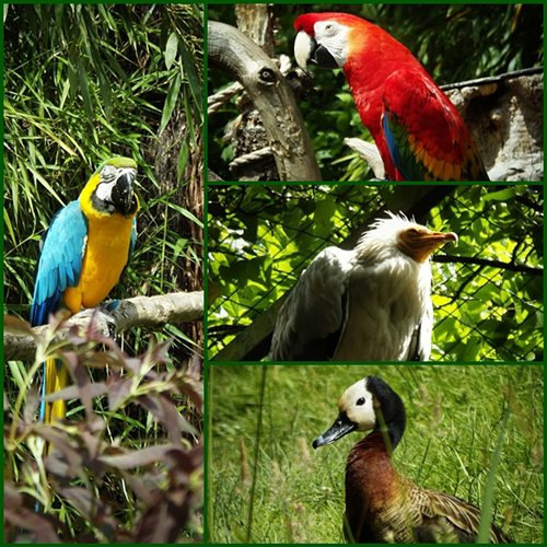 Zoo de champrépus