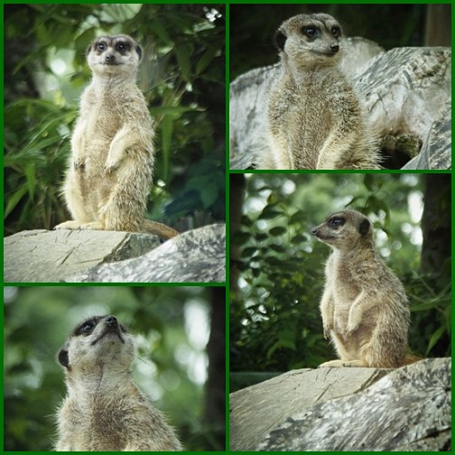 Zoo de champrépus partie 2