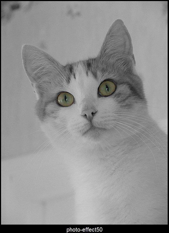 """""""Il suffit de croiser son regard avec celui d'un chat pour mesurer la profondeur des énigmes que chaque paillette de ses yeux pose aux braves humains que nous sommes.""""  Jacques Laurent"""