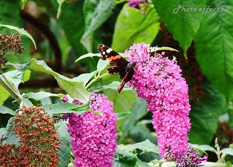 « Les proverbes ressemblent aux papillons ; on en attrape quelques-uns, les autres s'envolent. »  {Wilhelm Wander}