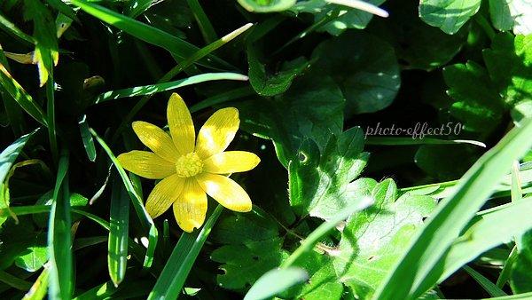 """""""La nature est éternellement jeune, belle et généreuse. Elle verse la poésie et la beauté à tous les êtres, à toutes les plantes, qu'on laisse s'y développer à souhait. Elle possède le secret du bonheur, et nul n'a su le lui ravir."""" Georges Sand"""