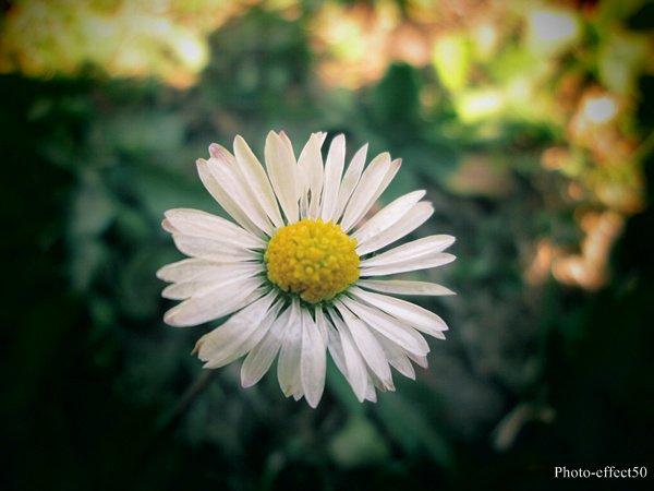 Savoir apprécier la beauté de la moindre petite chose...