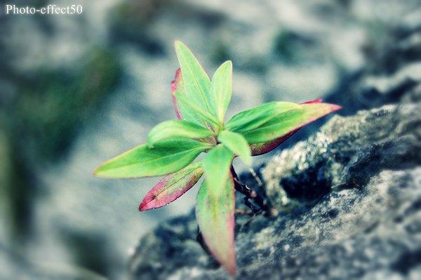 La vie ressemble à un conte ; ce qui importe, ce n'est pas sa longueur, mais sa valeur...