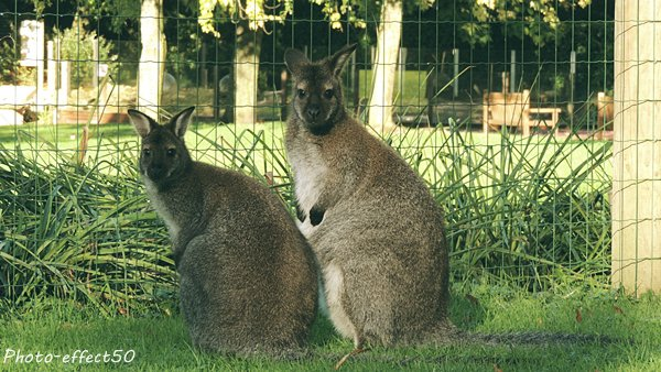 If you Wallaby my lover ^^