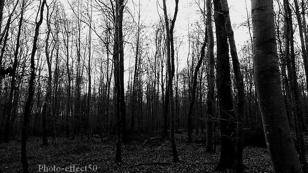 """""""La forêt est un état d'âme.""""  Gaston Bachelard"""