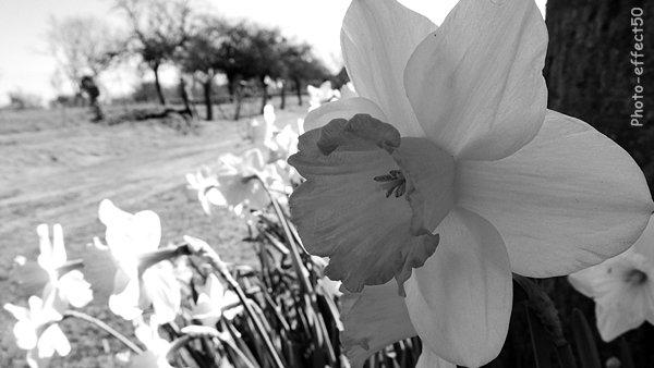 Le vrai bonheur est celui que l'on cultive journée par journée comme les fleurs.  Livette Laroche
