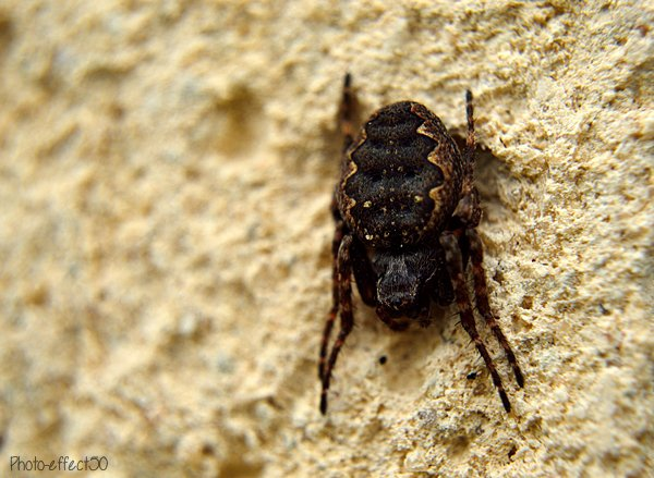 « L'enseignement de l'araignée n'est pas pour la mouche.  »   Henri Michaux