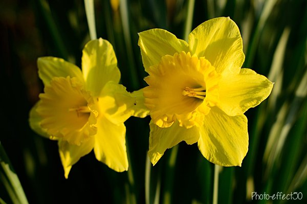 « Les fleurs du printemps sont les rêves de l'hiver racontés, le matin, à la table des anges. »   Khalil Gibran