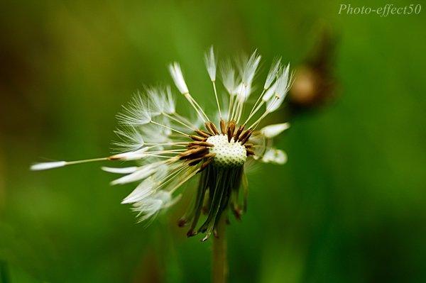✿...Petite Nature..✿