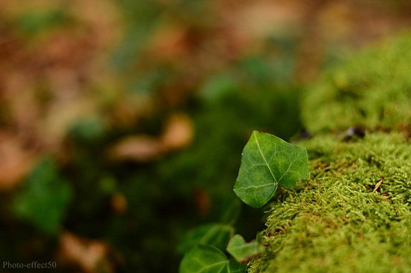 """""""Ecoutez la forêt qui pousse plutôt que l'arbre qui tombe.""""    Friedrich Hegel"""