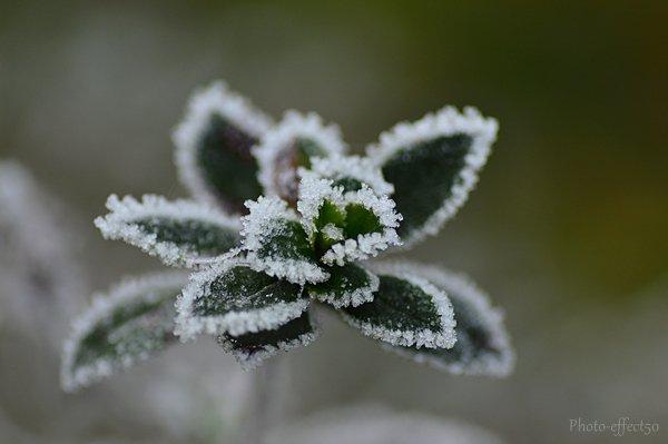 """""""Il faut toujours un hiver pour bercer un printemps."""""""