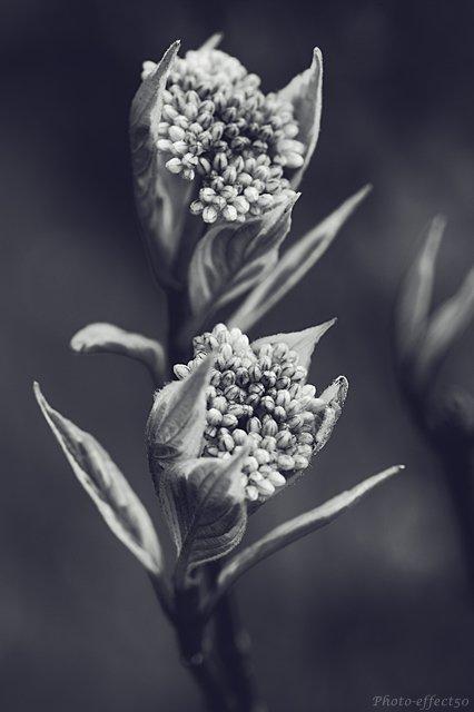 « Il est d'étranges soirs où les fleurs ont une âme »  Albert Samain