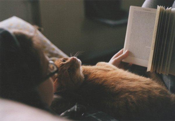 Les livres qui m'attendent sagement...