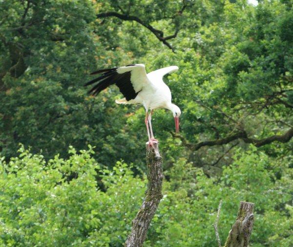 Parc animalier de sainte croix dans le 57 blog de agrigolf68 for Parc animalier dans les yvelines