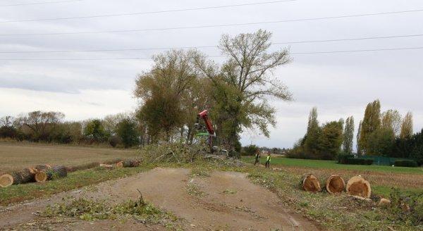 abattages arbres sur r d 39